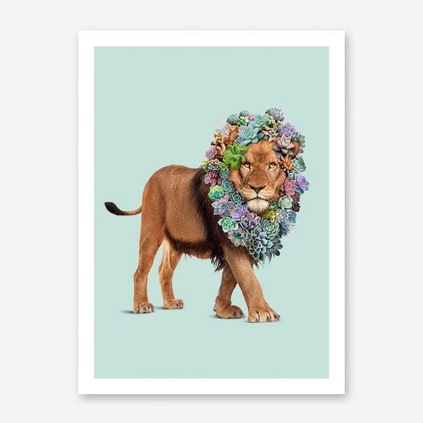 Picture of Succulent Lion