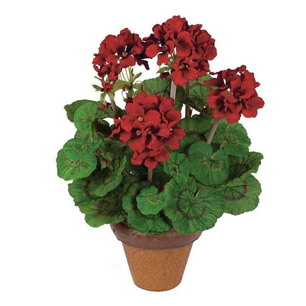 Picture of Indoor/Outdoor Red Silk Geranium Potted Plant